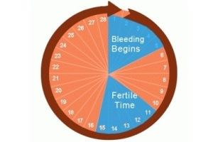 Овуляционный цикл