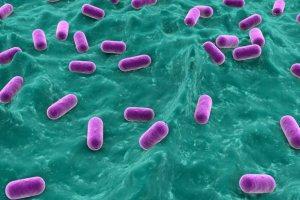 Лактобактерии в микрофлоре влагалища