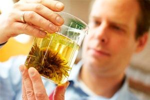 Трава шалфей: применение в гинекологии для лечения бесплодия