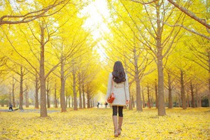 yellow-tree-with-girl