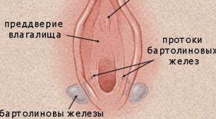 Бартолиновы железы