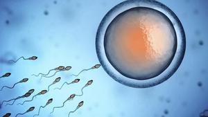 Яйцеклетка и сперма